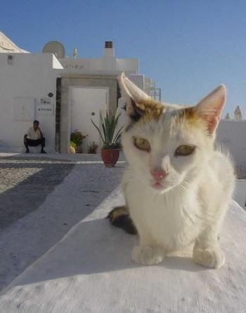 Greece-Cat