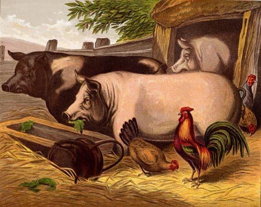 Pigs_in_the_Barnyard